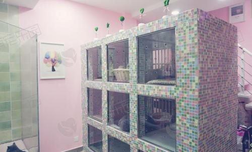 猫舍和宠物店有什么区别?